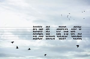 blog-birds-2