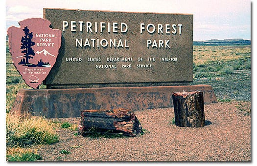 petriefied forest