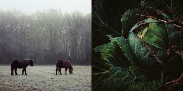 collage natuurfotografie