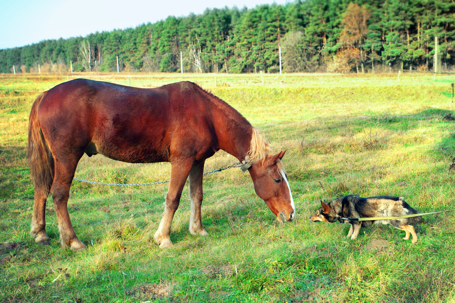38694490 - horse and dog sniff to each other