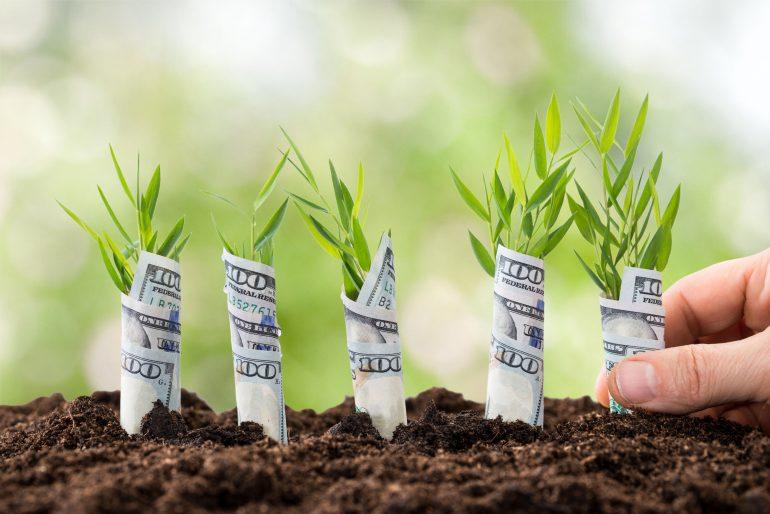 startup-plantjes
