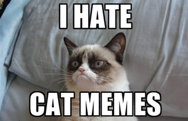 Grumpycat haat cat memes