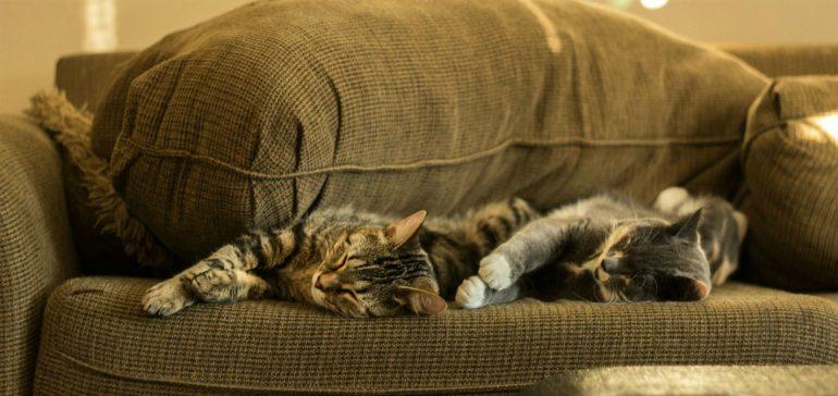 Twee katten slapen op bank