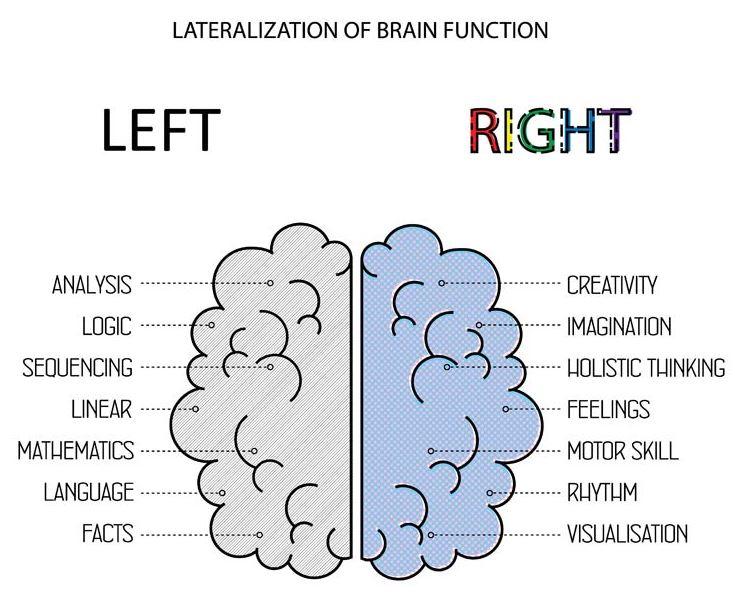 Afbeelding van de indeling van je hersenen, wat handig is voor de inzet van neuromarketing.
