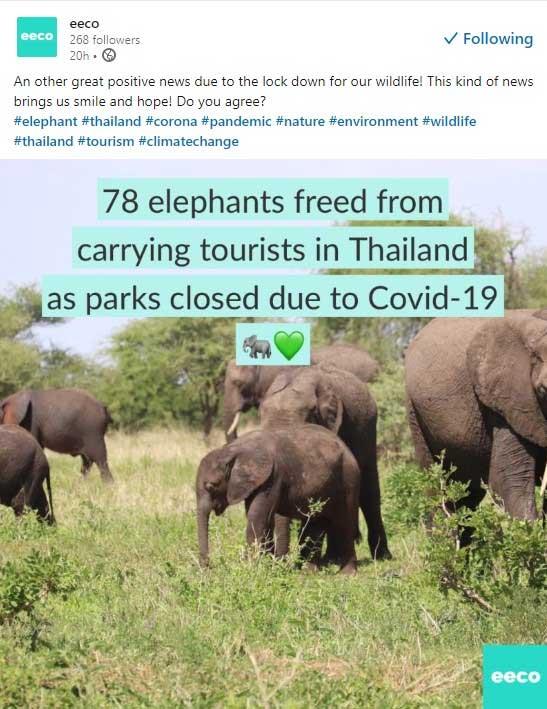 Eeco op LinkedIn: olifanten in Thailand vrij omdat er geen toeristen meer zijn.