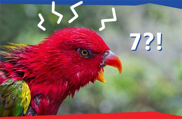 Papegaai over 7 contactmomenten.