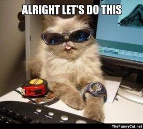 grappige foto van kat met de tekst we gaan het doen