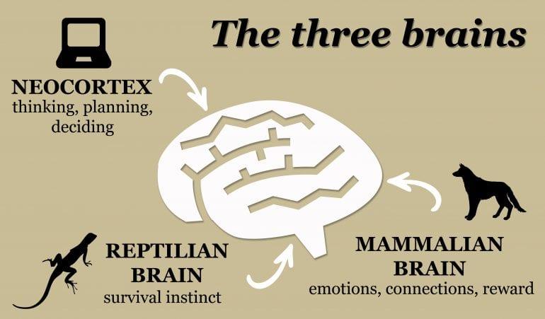 De drie breinen