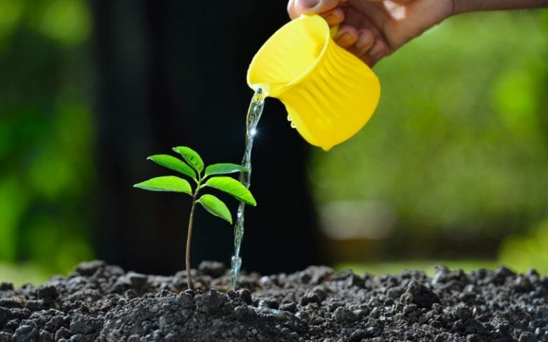 Plant water geven om te groeien