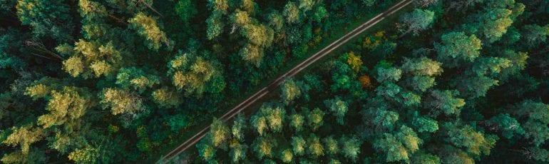 Bos van bovenaf met weg erdoor, bij artikel over regenerative marketing.