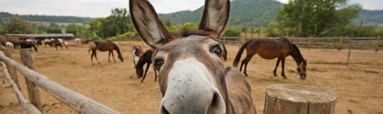 Een ezel die kijk naar moeilijke woorden.