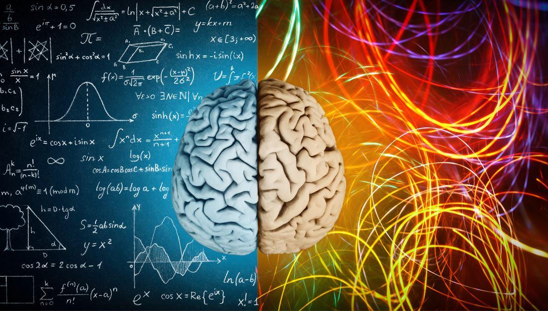 Twee kanten van het brein.